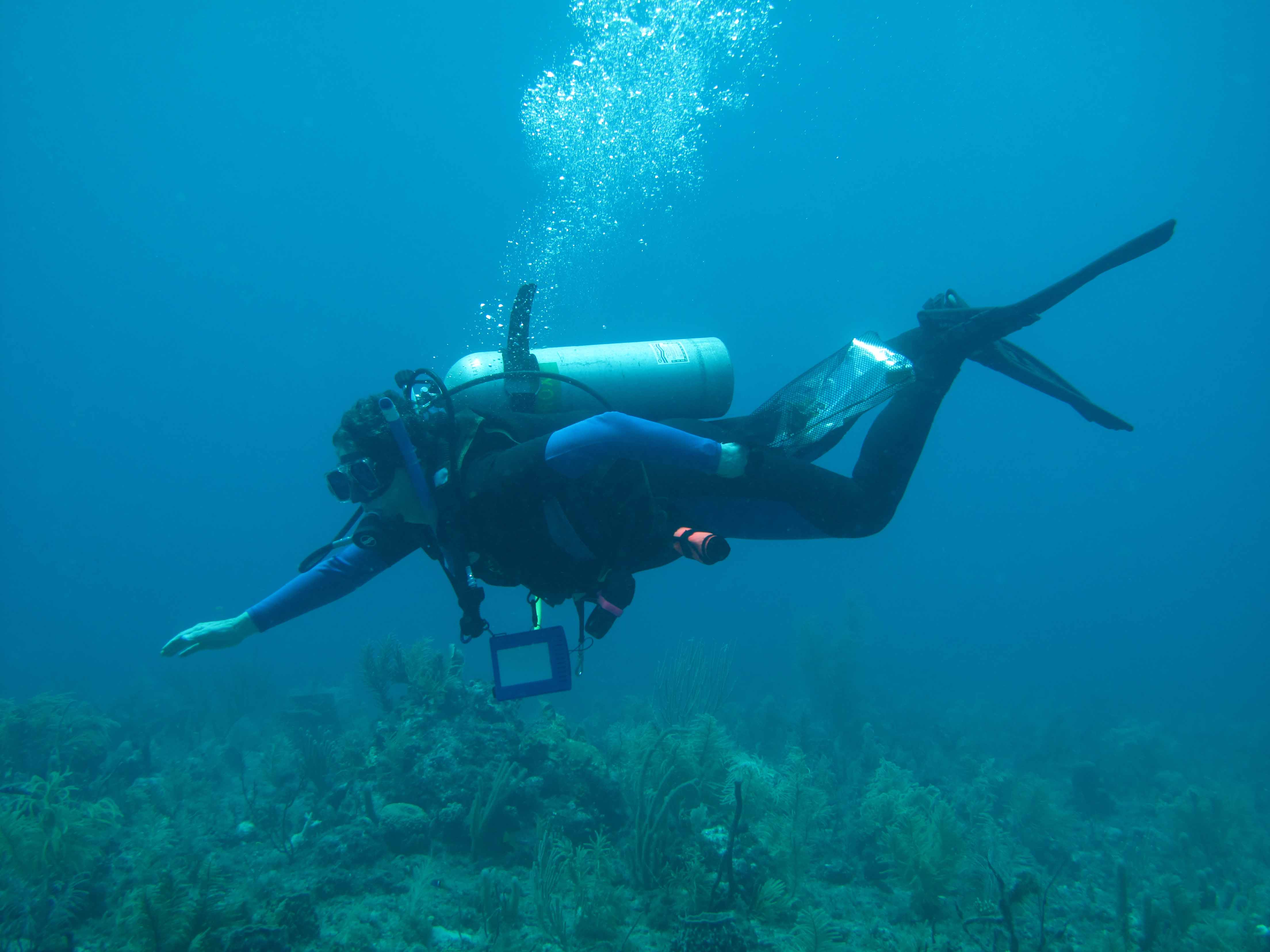 marine biology dissertations 'the course page for bsc marine biology with oceanography at the  projects and dissertations may be  • marine biology students will.