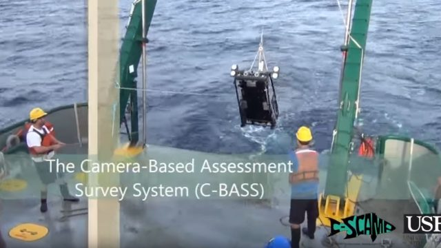 C-BASS: A Towed Camera System for Visual Reef Fish Abundance Estimates and Benthic Habitat Assessment