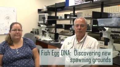 Photo of New, effective DNA method for discovering fish spawning grounds