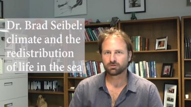 Photo of Climate and the redistribution of life in the sea