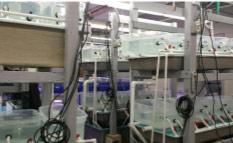 Aquarium Laboratory