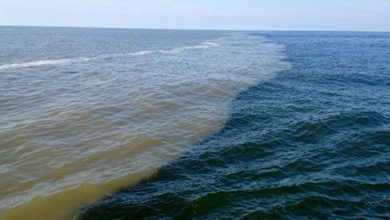 Photo of Cycling of carbon from the Deepwater Horizon in the Gulf of Mexico