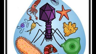 Marine Viruses