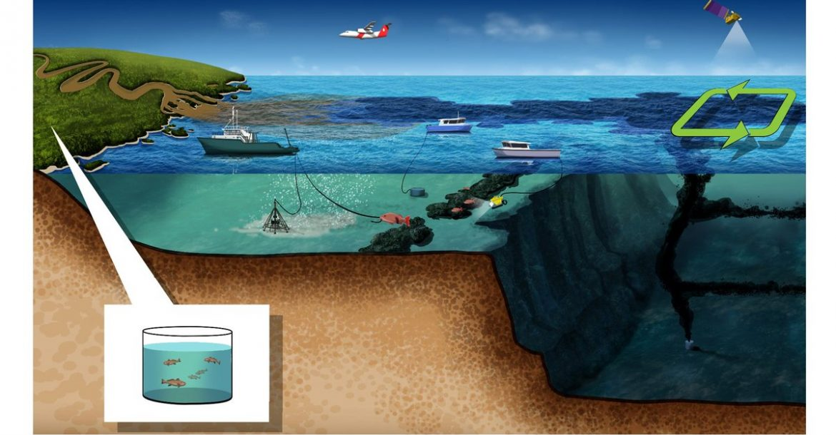 Impacts on fisheries following an oil spill