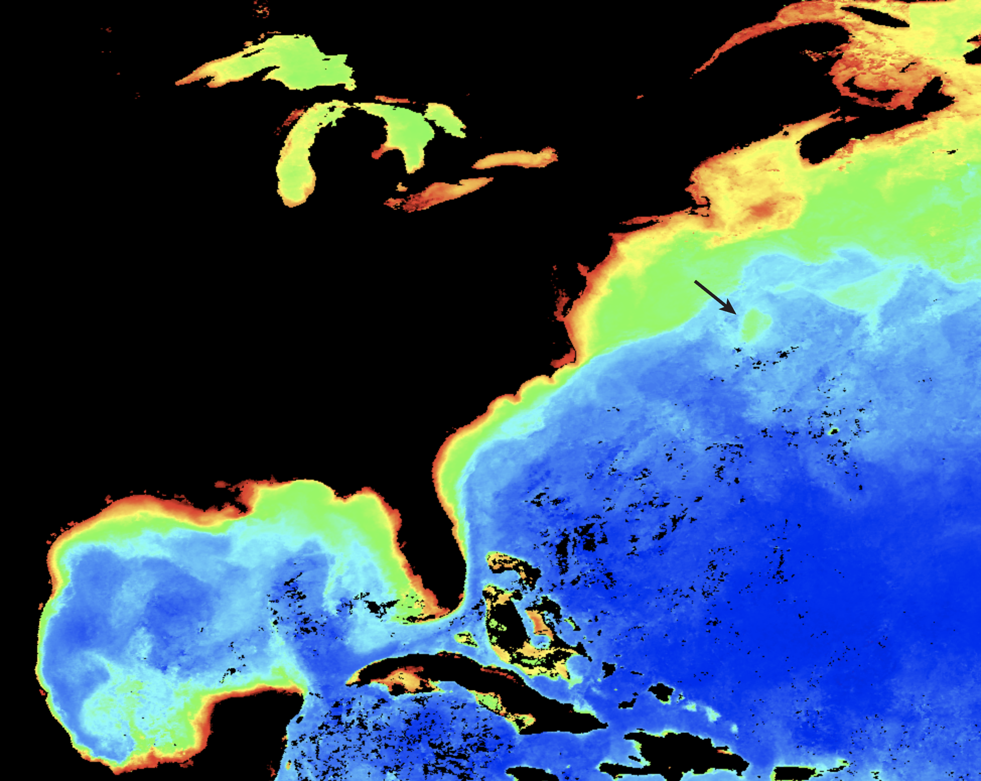Image from NASA's MODIS satellite for October 2011, showing the Gulf Stream Eddy targeted in the study, picked out by surface chlorophyll (credit NASA)