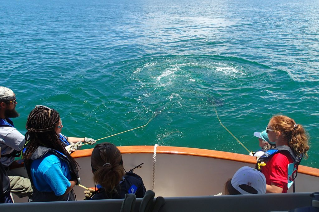 Campers and mentors look on as OCG staff handle the lines of the plankton nets. Photo credit: OCG Staff