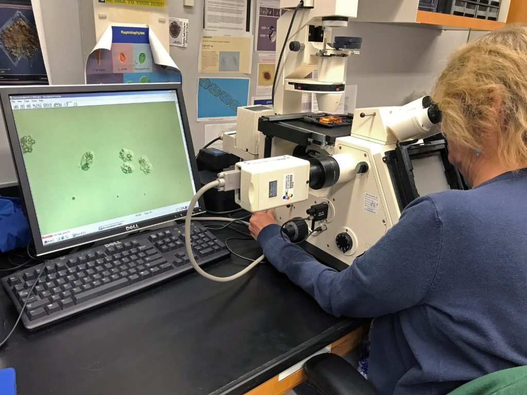 Caption: A microscopist with FWC's Fish and Wildlife Research Institute analyzes a sample containing Karenia brevis (displayed on the screen). Photo courtesy of FWC.