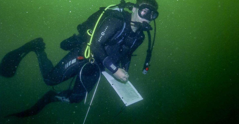 Diver Jon Peake conducting fish surveys