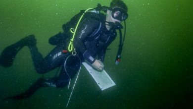 Diver Jon Peake conducting fish surveys