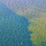 Karenia Brevis Bloom Offshore Pinellas County September 16, 2005