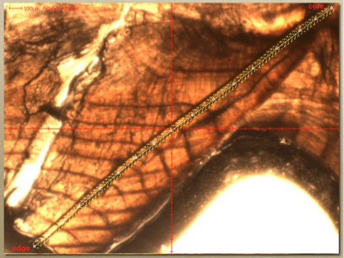 Line scans traversing the surface of thin sections are used to construct otolith core-to-edge profiles depicting life-history transitions and movement among water masses.