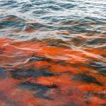 Oil Slick September 2012