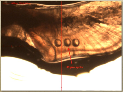 Replicate spot scans are used to sample discrete time periods during the life history of a fish.