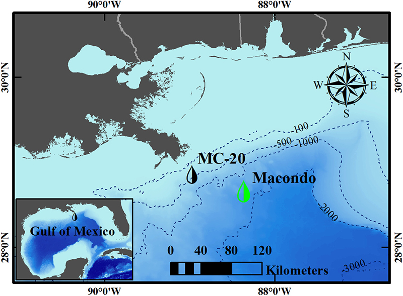 The MC-20 site (black droplet top: latitude 28.94, longitude −88.97, which also applies to the following figures) is 17 km offshore of the Mississippi River Delta in the Gulf of Mexico (GoM) at a water depth of 145 m. The 2010 DeepWater Horizon (DWH) oil spill in the Macondo site (green droplet top: latitude 28.74, longitude −88.37) is ~60 km southeast of the MC-20 site with a water depth of ~1500 m. The background color in the GoM denotes the water depth, and major bathymetry contours (in units of meters) have been noted on the map.