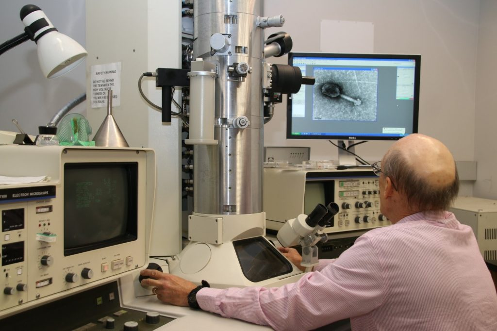 Caption: Manning the TEM station, Tony Greco looks at an image of an individual virus.