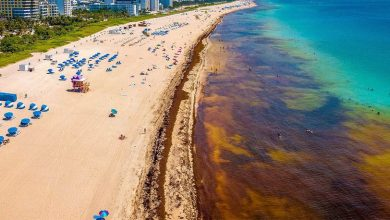 Photo of Huge Sargassum Seaweed Blooms Again Threaten Florida, Caribbean and Mexico