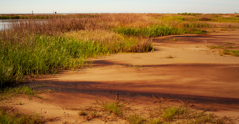 Oiled Marsh. Photo Credit: C-IMAGE