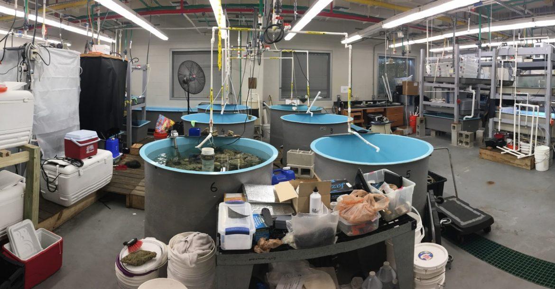 The Research Aquarium Lab - USF College of Marine Science