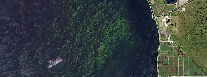 An aerial shot of Florida's largest lake, Lake Okeechobee. Photo courtesy of Wikipedia Commons