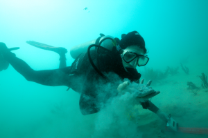 Rachel Silverstein of Miami Waterkeeper diving within 150 m of the shipping channel on the Inner reef, holding fine sediments. Photo Credit: P Zuccarini