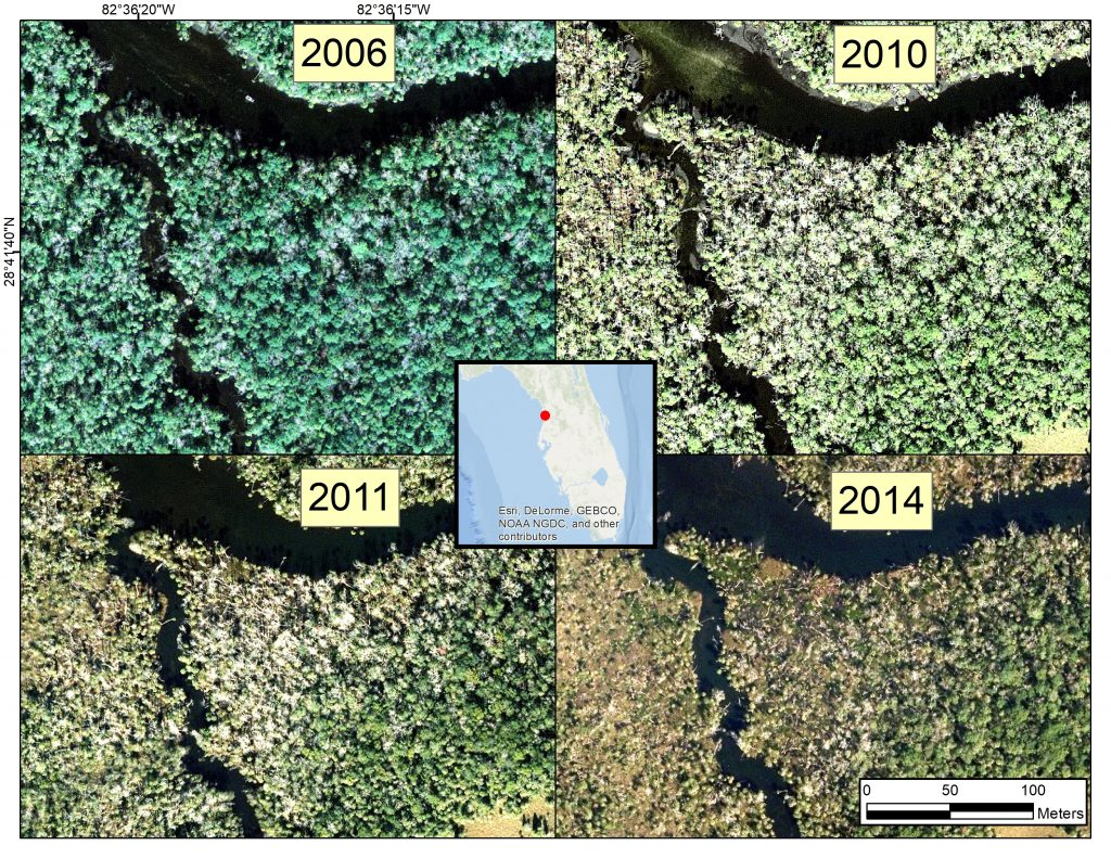 Figure 3: Additional aerial photographs of the tributary along the Chassahowitzka River. from 2006, 2010, 2011, and 2014 showing forest decline in recent years. Note the increase in open patches of bare ground in 2014. (Credit: ESRI, DeLorme, GEBCO, NOAA NGDC, and others)