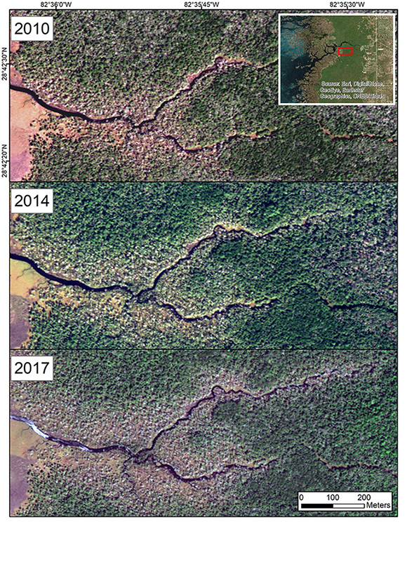 Figure 5: This time series shows coastal forest loss along a Chassahowitzka River tributary from 2010 to 2017. The forests showed no apparent signs of recovery after cold snap events in 2010 and 2011. (WorldView-2 imagery, Copyright 2010 Digital Globe, Inc.)