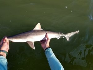 One of Parsons' students holding a blacktip shark. Photo credit: Parsons' lab