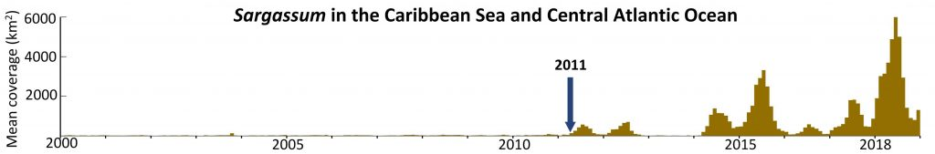 "This plot shows the dramatic change in Sargassum biomass since 2000. Note the start of a ""new normal"" in 2011, and a particularly bad year in 2018. Credit: USF College of Marine Science"