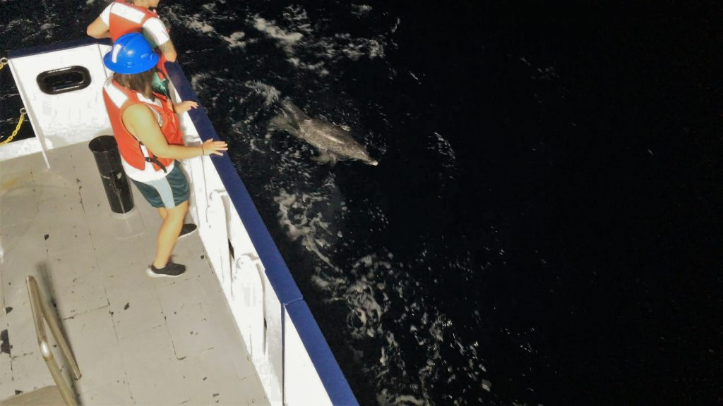 An Atlantic spotted dolphin surfacing along the port quarter of the R/V Hogarth.