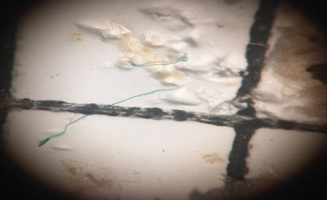 Green microplastic thread melted at the end from the heated probe test. Photo Credit: Cypress Hansen
