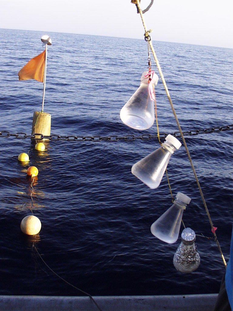 From November 1995 to January 2017, the CARIACO Ocean Time Series team studied the relationship between surface primary production, regional hydrography, physical forcing variables (such as the wind), and the settling flux of particulate organic carbon in the Cariaco Basin. Shown here are Primary Productivity bottles for incubation.