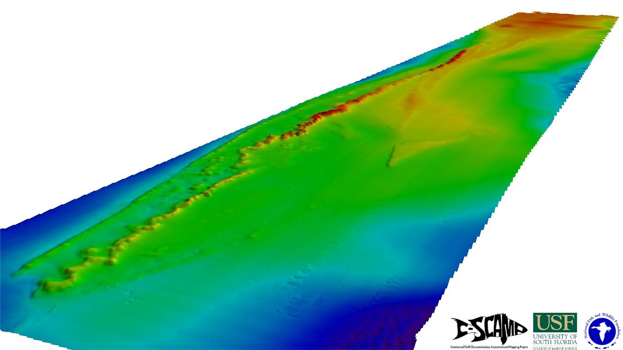 3D bathymetry map collected in 2015 with multibeam sonar of a region 90 nautical miles off Tampa Bay in the eastern Gulf of Mexico known as The Elbow (image credit Jennifer Brizzolara)