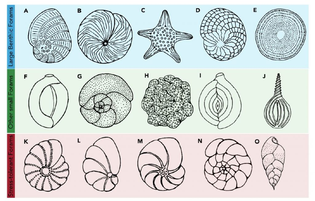 Different Types of Forams