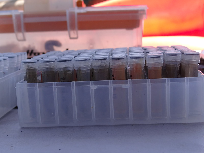 9. The team collects many vials of fin clips on each survey.