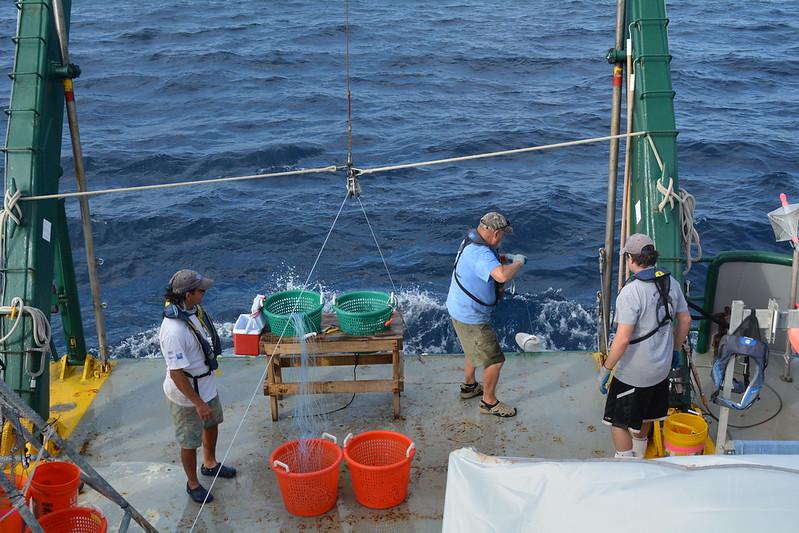 6b. Steve Murawski (light blue shirt) pulls up a shark.