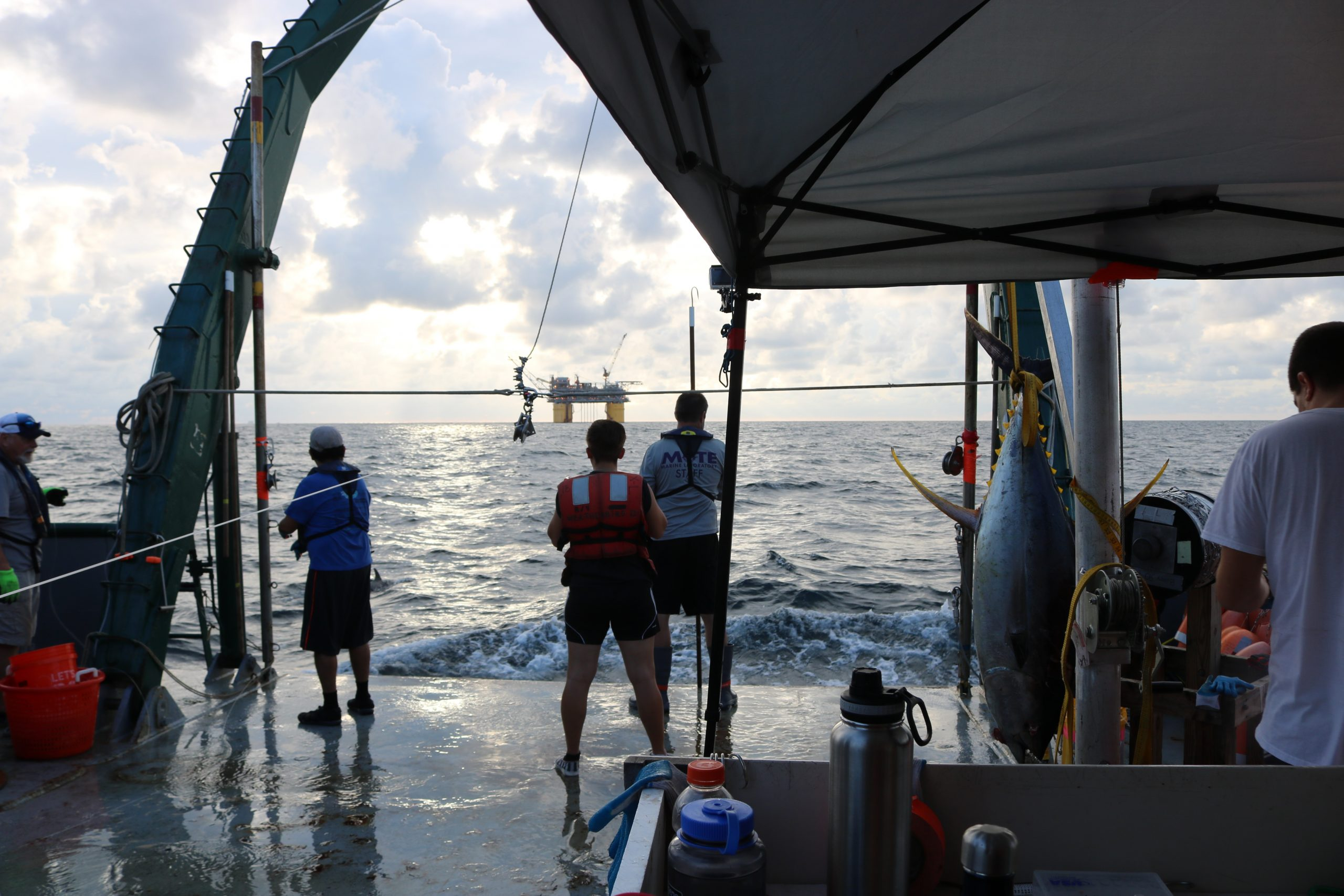 6c. Fish surveys led by the USF College of Marine Science since the Deepwater Horizon Oil Spill have taken place throughout the Gulf of Mexico, including regions with high densities of oil and gas infrastructure.