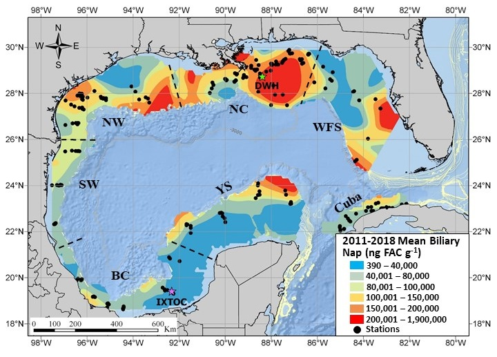 This heatmap shows the north central (NC) region of the Gulf of Mexico as the hot spot of PAH concentrations (specifically a chemical component of oil called naphthalene), as confirmed in the study of bile from 91 fish species sampled in the Gulf of Mexico from 2011-2018. This is the largest study of its kind. Additional hotspots are located off major population centers, such as Tampa Bay.